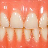 Bacterias y periodoncia
